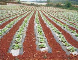 天水地膜农膜生产厂家-为您提供实惠的兰州地膜资讯