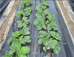 安陽農膜批發-天水進宏塑化_口碑好的安陽農膜供應商