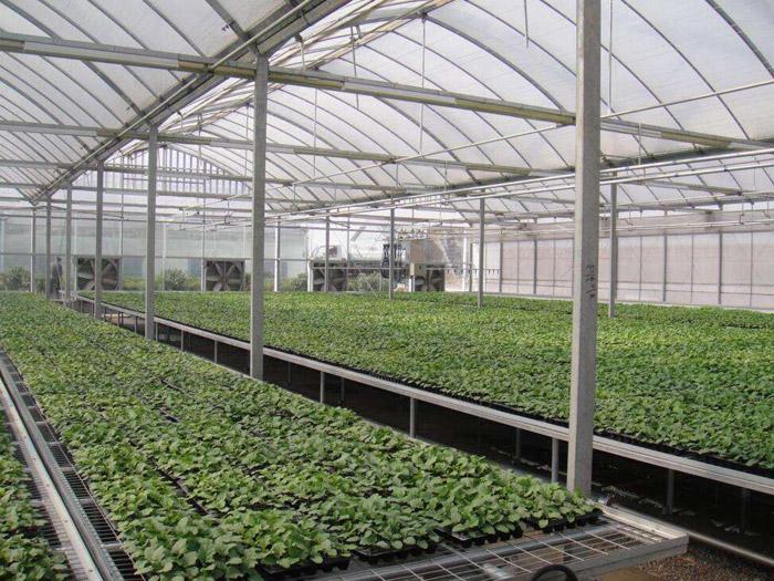 高温蔬菜大棚,高温蔬菜大棚承建,高温蔬菜大棚价格