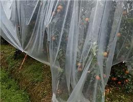天水安陽農膜價格-高性價安陽農膜就在天水進宏塑化