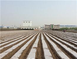 安陽地膜廠家-天水銷量好的安陽地膜提供商