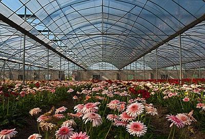 花卉温室——花卉大棚
