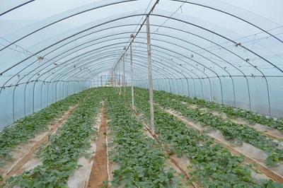 蔬菜温室|蔬菜大棚