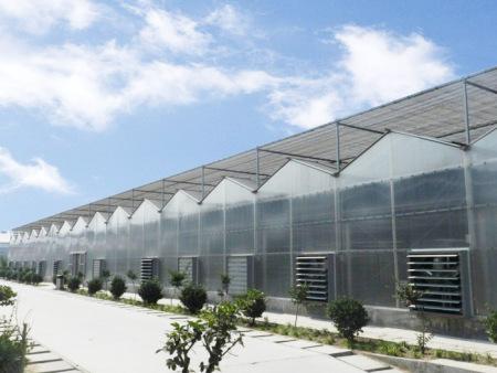 遼寧文洛式PC板連棟溫室價格