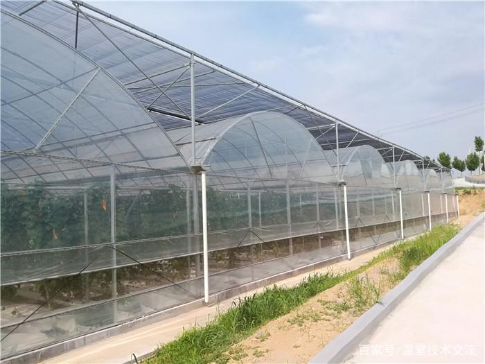 甘肃钢架连栋温室建设