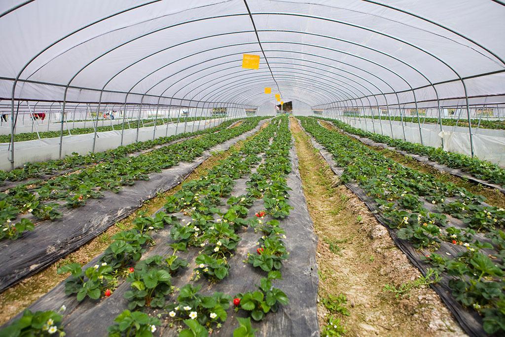 内蒙古智慧农业温室建造商