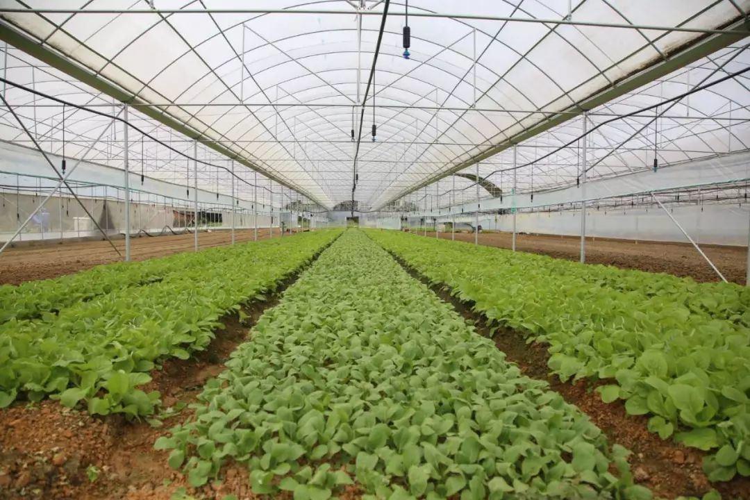 内蒙古蔬菜温室设计