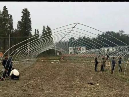 天津連棟育苗溫室工程報價