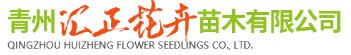 青州汇正花卉苗木有限公司