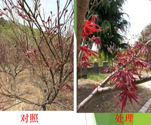 農作物專用葉面肥-南京禾稼春生物科技有限公司