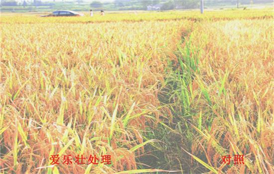安徽小麦增产肥料哪个牌子好