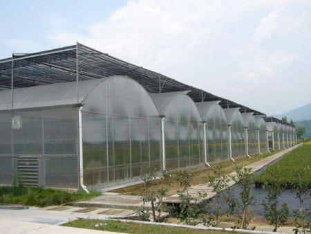 湖北連棟溫室蔬菜大棚建設廠家