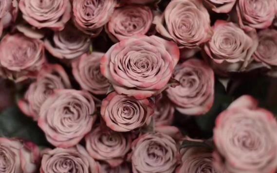 藍蝴蝶花-肯尼亞玫瑰產地-束花