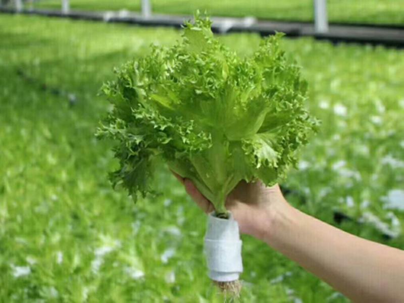 江苏椰糠无土栽培技术如何培养