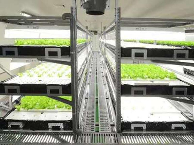 山東巖棉栽培技術如何培養