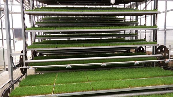 全自动育秧苗床设备厂家/育苗设备厂家/衡东辉远科技有限公司
