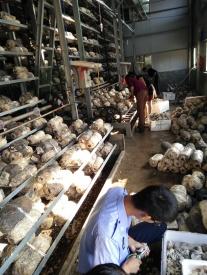 广西蘑菇种植机械设备厂家
