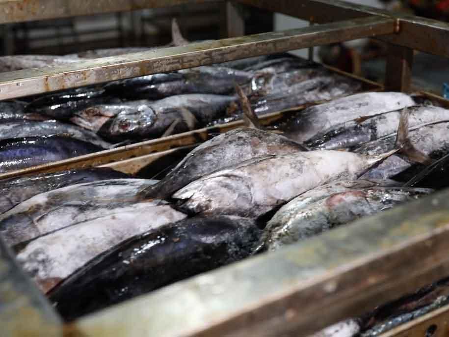 海鱼罐头代加工