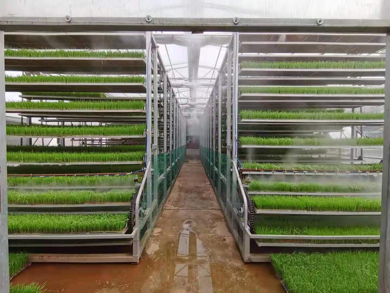 上循环运动式育苗设备/工厂化育秧设备/智能育苗设备/振通科技